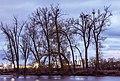 Heron Rookery - Mississippi River Nests (26550107156).jpg