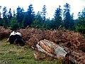 Hier wütete 1999 der Sturm Lothar - panoramio.jpg