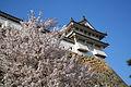 Himeji castle April 18.jpg