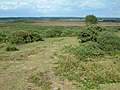 Hincheslea Moor, New Forest - geograph.org.uk - 37770.jpg