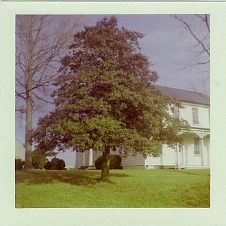 Butler Farm - Holly tree in front of the Butler farm on High Street, circa 1974.