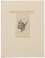 Homo sapiens - Negroïde ras - 1872 - Print - Iconographia Zoologica - Special Collections University of Amsterdam - UBA01 IZ19400056.tif