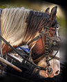 Horse (8058306936) (2).jpg