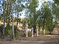 Horshim wood026.jpg