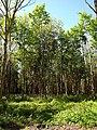 Howdean Plantation - geograph.org.uk - 1332126.jpg
