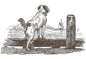 Hunden ved stranden