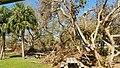 Hurricane Irma Cleanup (23543091938).jpg