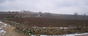 IMG Vignoble de Meursault 2.JPG