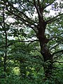 Il bosco - panoramio.jpg