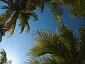In Isla Mujeres, Christmas 2009 (4257553526).jpg