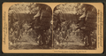 In the heart of a banana plantation, Hawaiian Islands, by Strohmeyer & Wyman 3.png