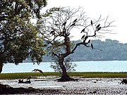 The Salim Ali Bird sanctuary is one of the best-known bird sanctuaries in India.