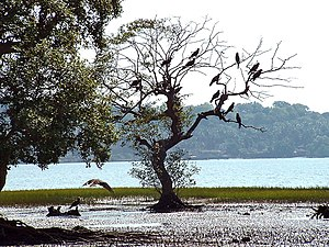 Panaji - Inside the Salim Ali Bird Sanctuary