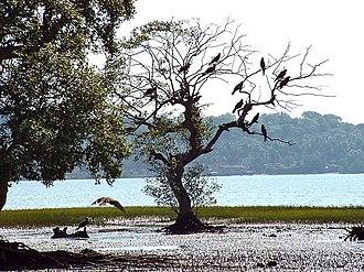 Panaji - Inside the Salim Ali Bird Sanctuary