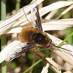 Insekt 01.jpg
