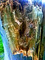 Inside cracked tree.jpg