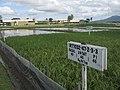 International Rice Research Institute in Los Baños - panoramio.jpg