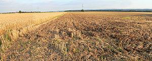 Ackerfläche unter der die Reste der Isenburg liegen