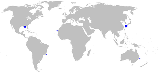 Largetooth cookiecutter shark Species of shark
