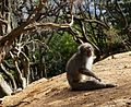 Iwatayama Monkey Park, Kyoto 3-25 (26423087031).jpg
