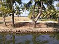 Jaisen Wiki Jalayathra 2013 Alappuzha Vembanad Lake13.jpg