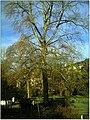 January Frost Botanic Garden Freiburg - Master Botany Photography 2014 - panoramio (2).jpg