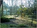 January Frost Botanic Garden Freiburg - Master Botany Photography 2014 - series Germany Diamond pictures - panoramio (5).jpg
