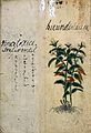 Japanese Herbal, 17th century Wellcome L0030082.jpg