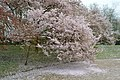 Japanse Tuin Hasselt - 01.jpg