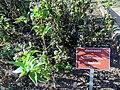 Jardim de Plantas Medicinais Jani Pereira (7).jpg