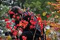 Jardin Japonais, Toulouse (8103258483).jpg
