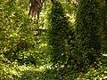 Jardines de Sabatini, bosque frondoso, Madrid, España, 2015.JPG