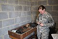 Joint Range Qualification led by AFNORTH Battalion 150318-A-BD610-005.jpg