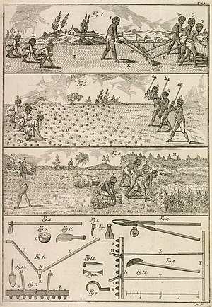 "Agriculture in Brazil - In the illustration of ""O Fazendeiro do Brasil"" (The Farmer in Brazil), 1806, José Mariano da Conceição Veloso describes the steps and tools used in the cultivation of indigo in Brazil."