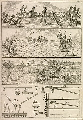 """Agriculture in Brazil - In the illustration of """"O Fazendeiro do Brasil"""" (The Farmer in Brazil), 1806, José Mariano da Conceição Veloso describes the steps and tools used in the cultivation of indigo in Brazil."""