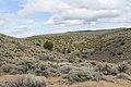 Jumbo Grade Trail - panoramio (63).jpg