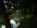 Kaczencowa Pond Nature reserve1,Nowa Huta,Krakow,Poland.JPG