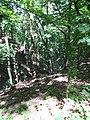 Kaniv Nature Reserve (May 2018) 85.jpg
