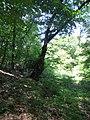 Kaniv Nature Reserve (May 2018) 99.jpg