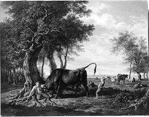 Hirt, von einem Stier angegriffen