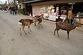 Kasuganocho, Nara, Nara Prefecture 630-8212, Japan - panoramio - jetsun (26).jpg