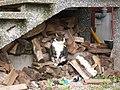Katter (6062412312).jpg