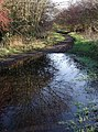 Kelsey Hill, Burstwick - geograph.org.uk - 291390.jpg