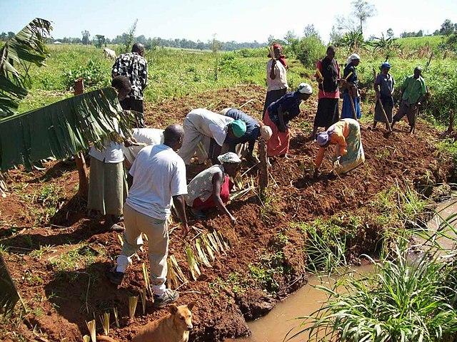 Kenya 2010 Planting Vetiver Grass