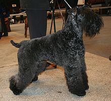 Image Result For Progressive Dog Training