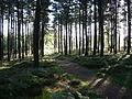 Kirkhill Forest, Tyrebagger hill. - geograph.org.uk - 91286.jpg