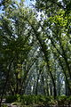 Kirovograd Park Kosmonavtiv 01 (YDS 4787).JPG