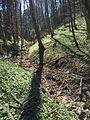 Klingenbach (Eyach) 03.JPG