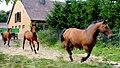 Konie zostały wypuszczone - panoramio.jpg