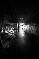 Krog Street Tunnel - Atlanta, GA - Flickr - hyku (41).jpg